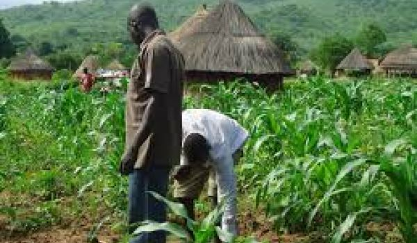 African nations warm to crop biotechnology for potential food security gains
