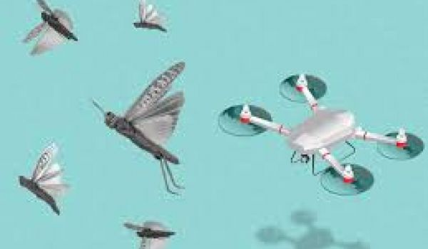 India likely to use drones to beat back locusts
