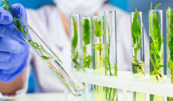 How Does Cara Therapeutics Inc (CARA) Stock Compare to Others in Biotechnology?